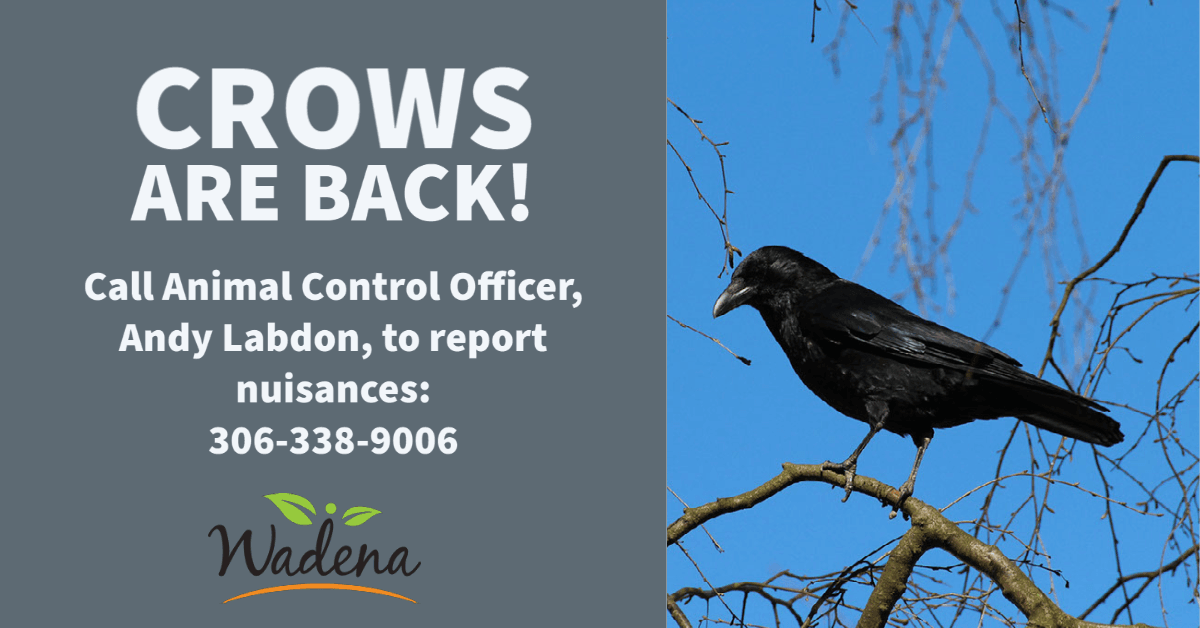2021.03.23 Crows Are Back!
